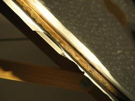 Maali tammetahvli serv, millelt mõõdetakse aastarõnga laiused.