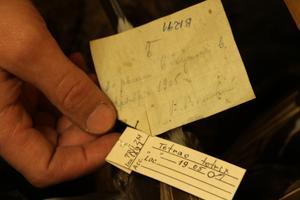 Nii mõnedki eksemplarid on kogudes enam kui saja aasta vanused (pildil teder).