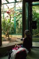 Loomaaia sünnipäev