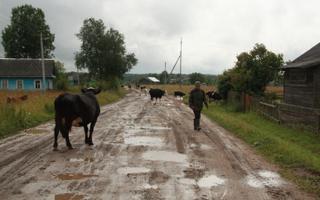 Karjus loomadega külatänaval. Päžare külastu, Vologda oblast, 2015.