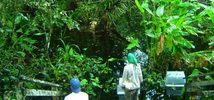 Florida madalsoomets