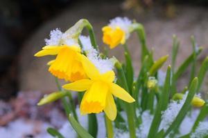 Kevadekuulutajad