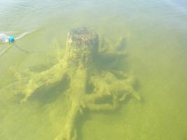 Juuli lõpus nentisid teadlased, et üleüldist õitsengut ei ole, ehkki vesi oli siiski