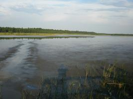 Saaremaa järvedes vesi küll soe, 26-27°C, kuid hapnikku oli normaalselt ja vesi ei õitsenud kuskil.