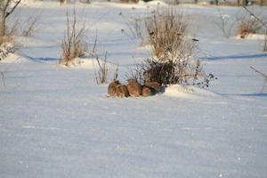 Loomad lumes