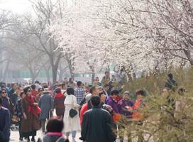 Hiina kevadõites