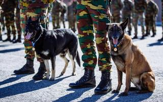 The dogs serving as part of the Belgian contingent likewise received NATO mission medals.