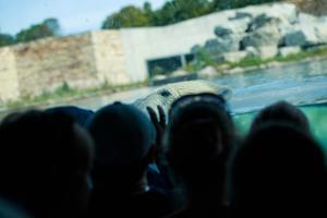 Tallinna loomaaed 80