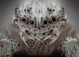 6. koht. Väike valgekarvuline ämbilik, (20X suurendus).