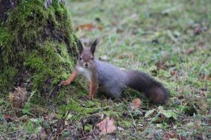 Ettevalmistused talveks, orav