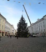 Установка рождественской елки в Тарту.