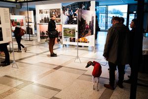 World Press Photo 2019 näitus Tallinnas