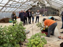 Early potato cultivation tests in a Estonian Crop Research Institute greenhouse in Jõgeva.