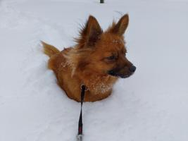 Gallery of readers' snow pictures.