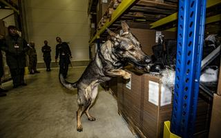 Military Police training drug, bomb and weapons dogs. March 2020.