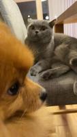 Sõbralikud lemmikloomad