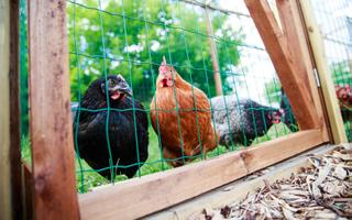 Bees and rentable chickens also live in the community.