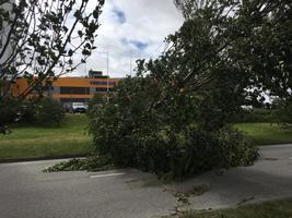 Murdunud puu Pärnus Terviseparadiisi juures