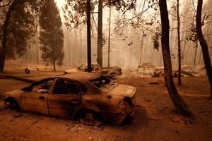 California maastikupõleng.