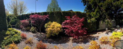 Сад на Котлепи, 28 в Хааберсти.