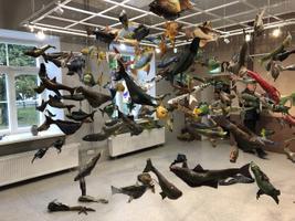 Haapsalu kunstikooli galerii täideti maast laeni kaladega