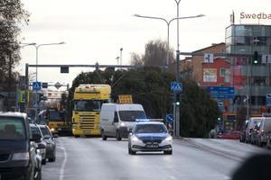 Tartu's 2020 Christmas tree arriving in the city.