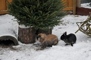 Animals in the snow.