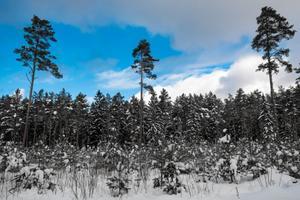Sinimustvalge loodus
