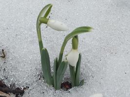 Esimesed kevademärgid Kullamaal