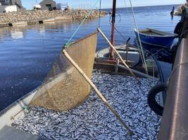 Рыбный порт в Пуртсе.