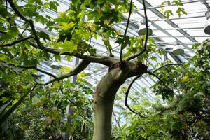 Открытие отремонтированного Пальмового дома в Ботаническом саду.