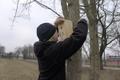 Lindude käitumisökoloogia töörühm paneb pesakaste üles.