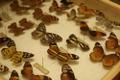 Troopilised liblikad.