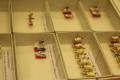 Punaste etikettidega holotüübid (eesplaanil kuldherilased, Chrysidida, ja rohekärblased, Dolichopodidae), on liigi esmaeksemplarid - olgugi, et väikesed, ei ole võimalik nende tähtsust ülehinnata.