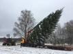 В Раквере установили традиционную рождественскую ель, искусственную доделывают