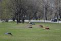 Неизвестные активисты раскрасили пни спиленных для строительства Рейти теэ деревьев.