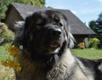 #MinuPidu - koer Nora piduehteis