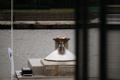 Открытие основания и чаши для олимпийского огня после реставрации.