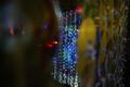 Valgus kõnnib Kadriorus kolmapäeval, 19. septembril.
