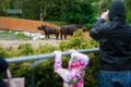 Ninasarvikupäev Tallinna loomaaias