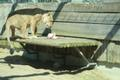 Lihavõttepühad loomaaias