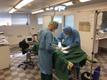 Операция львицы в Таллиннском зоопарке.