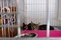 Members of NATO Battlegroup Estonia helped the nonprofit Narva Cat Room move to its new location across town on Thursday. June 6, 2019.