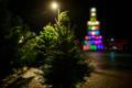 Teet Suure jõulukuusk Viimsis.
