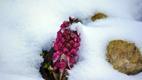 Lumine veebruari lõpp, katkujuur