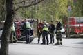 PPA, Rescue Board and other personnel searching for a mother bear and her cub in Tallinn's Haabersti district.