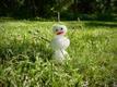 Jõulude paiku külmkappi peidetud lumememm