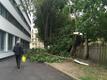 Tormiga murdunud puu Tallinnas Raua ja Vase tänava nurgal asuva lasteaia kõrval