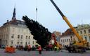 This year's Christmas tree being erected in Tallinn's Raekoja plats.
