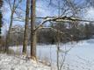 Kobraste läbinäritud võimsad tammed Mulgi vallas Kutsiku paisjärve kaldal ohustavad kalamehi ja risustavad järve.